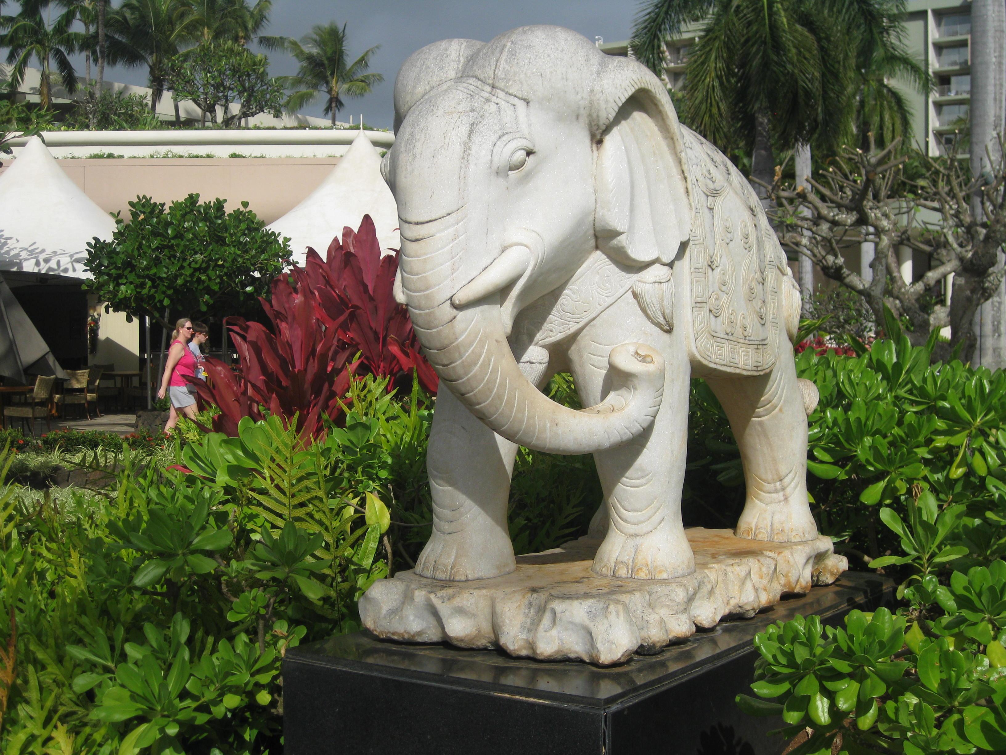 Elephant Maui