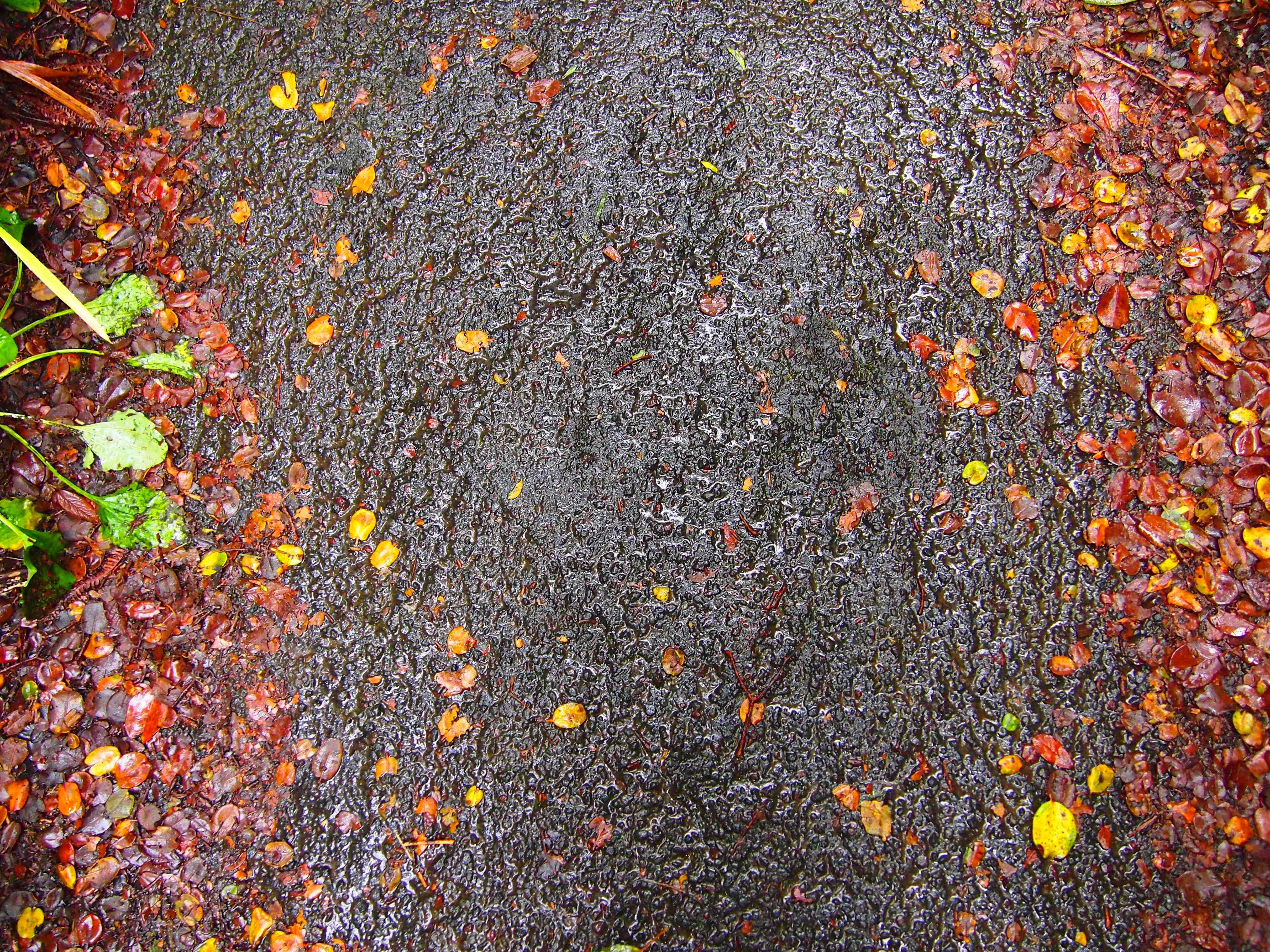 Volcano National Park Walkway