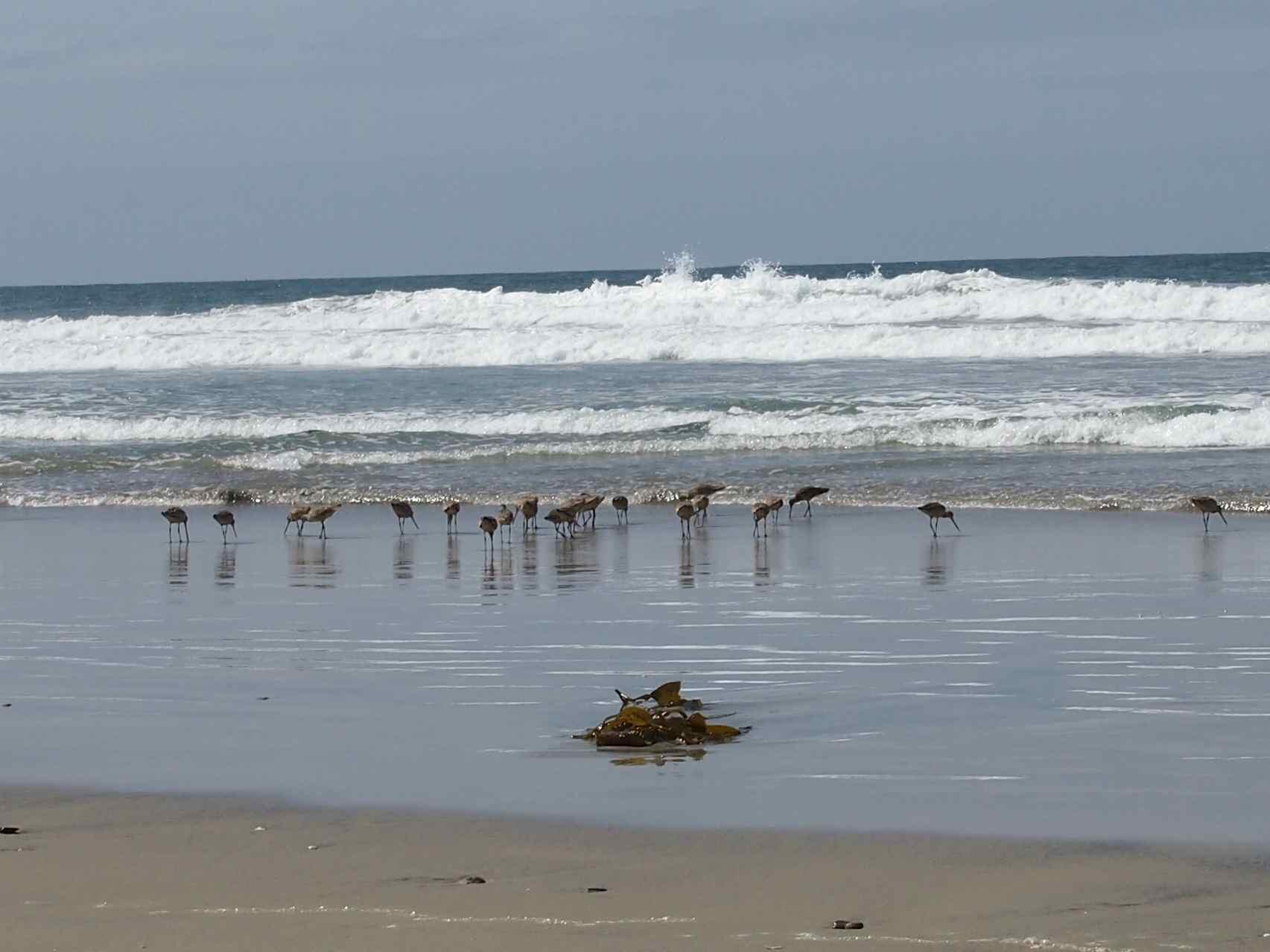 Imperial Beach 3