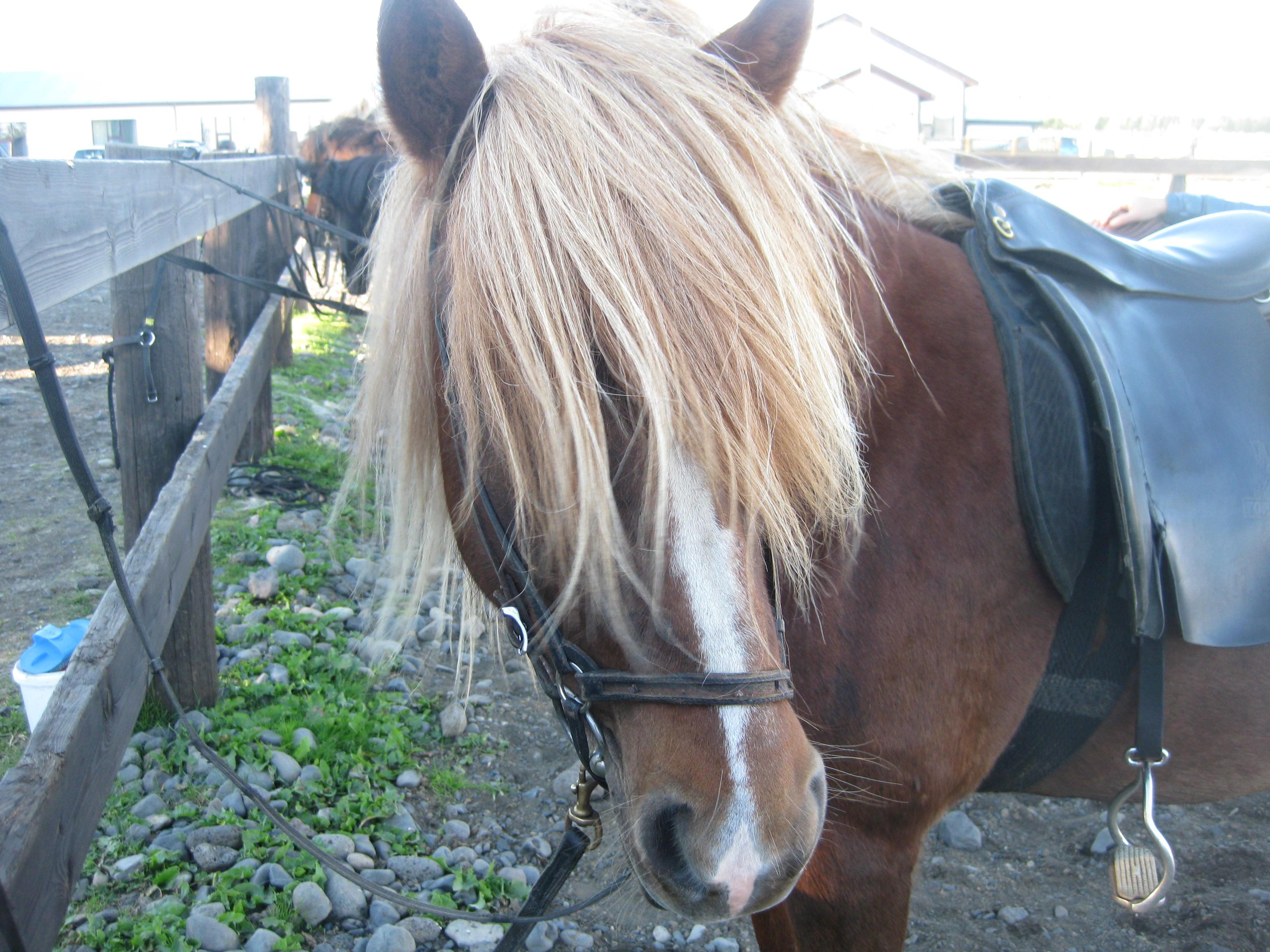 Horse Riding Iceland 4