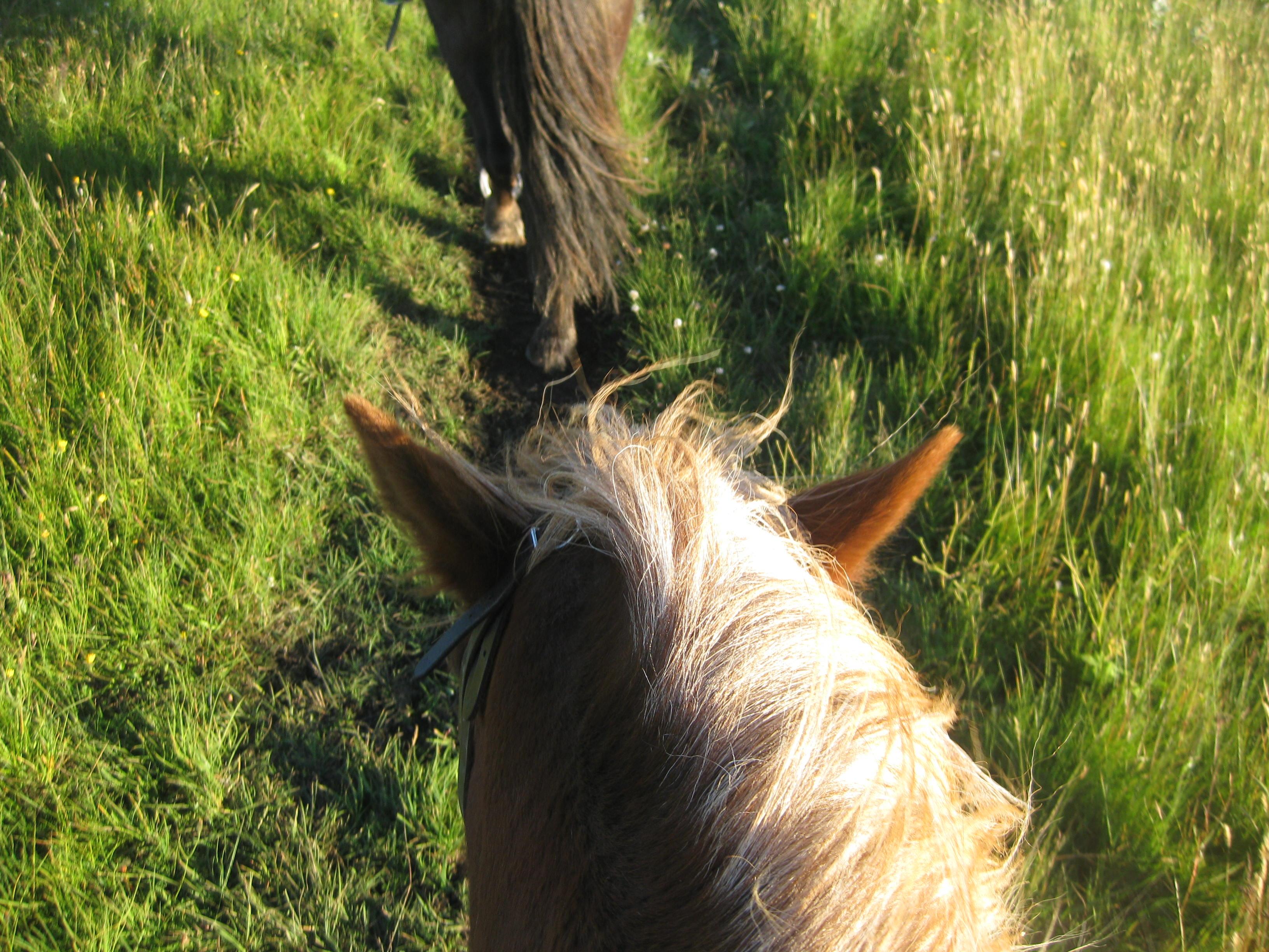 Horse Riding Iceland 5