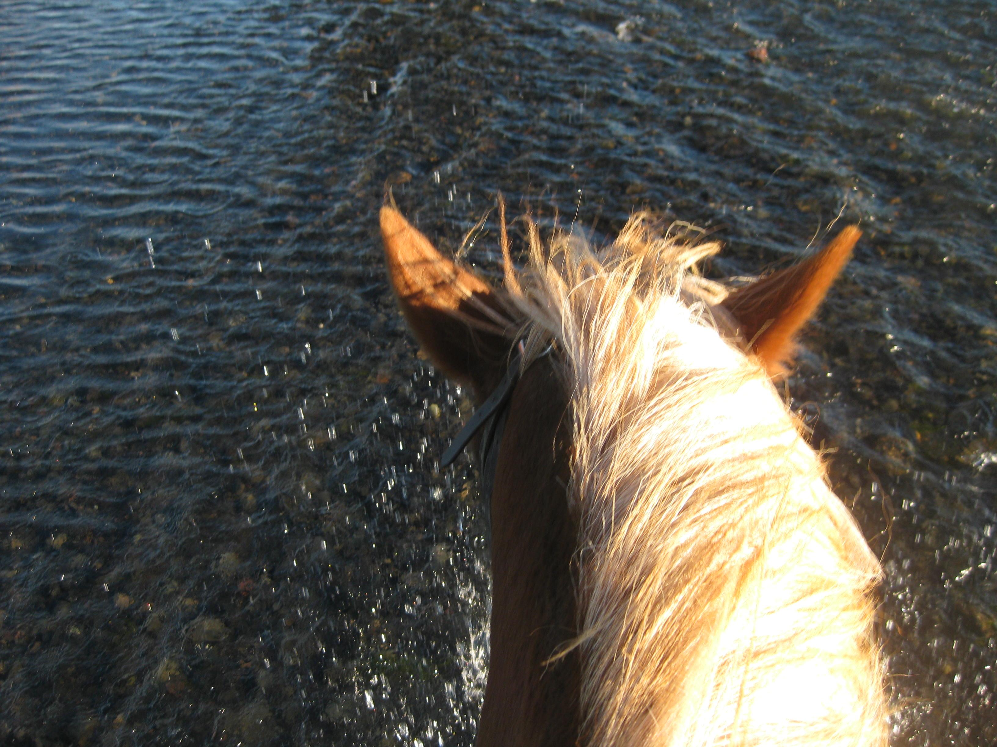 Horse Riding Iceland 6