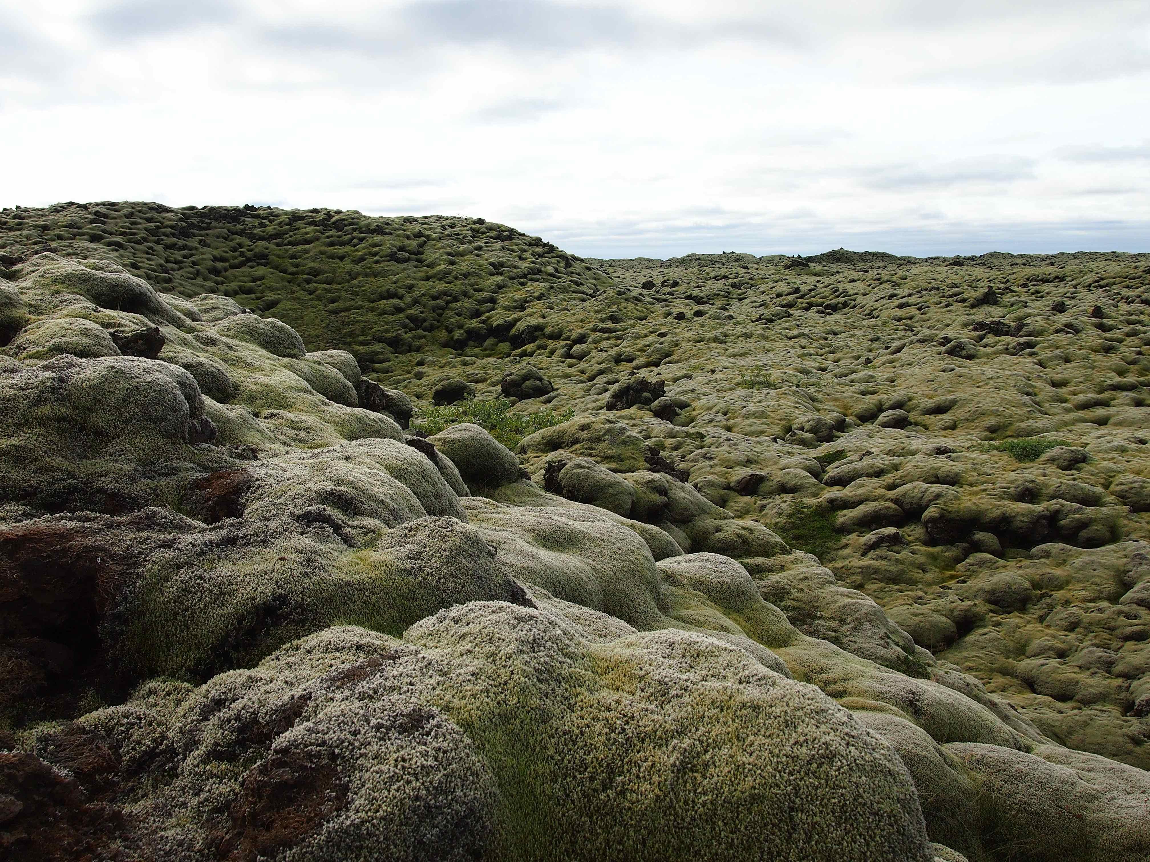 Moss Iceland 2