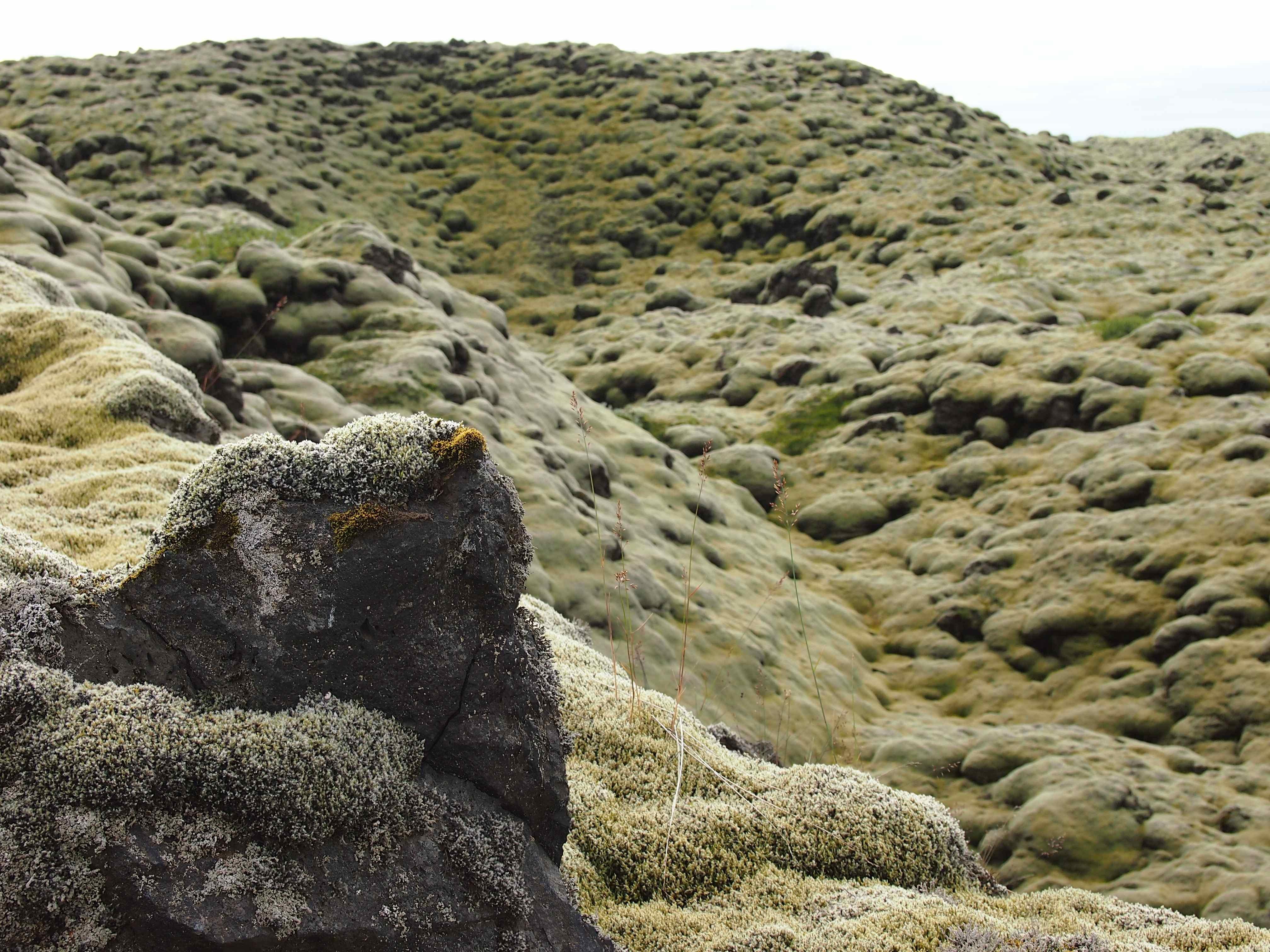 Moss Iceland 3