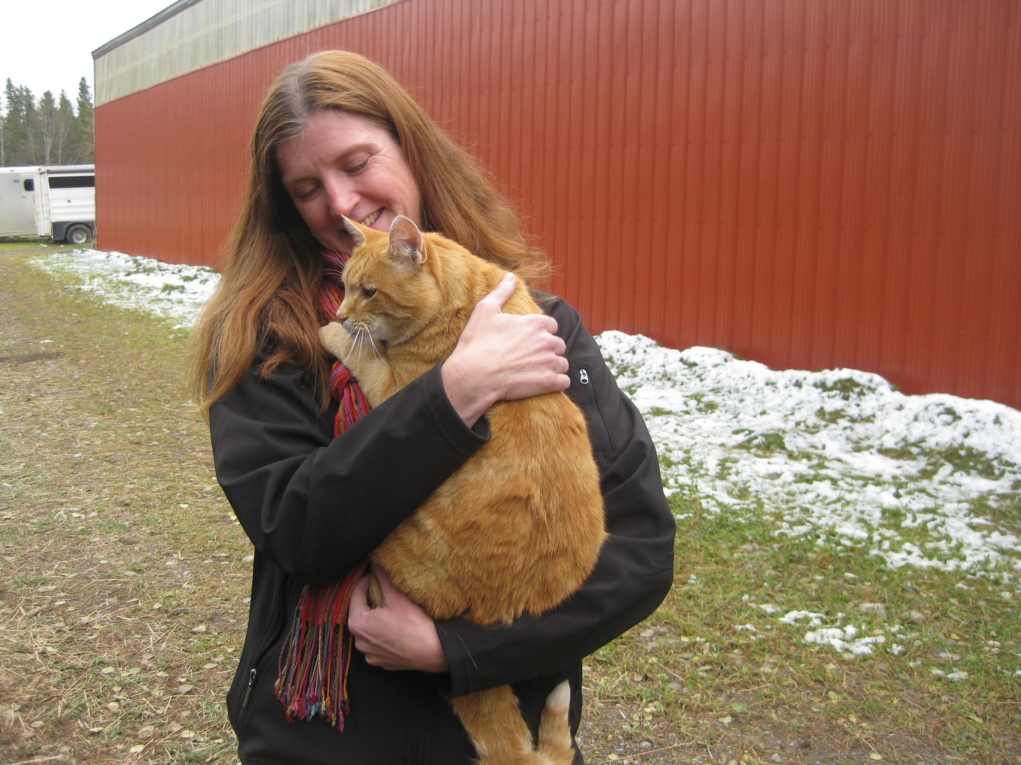 Ginger Cat 2