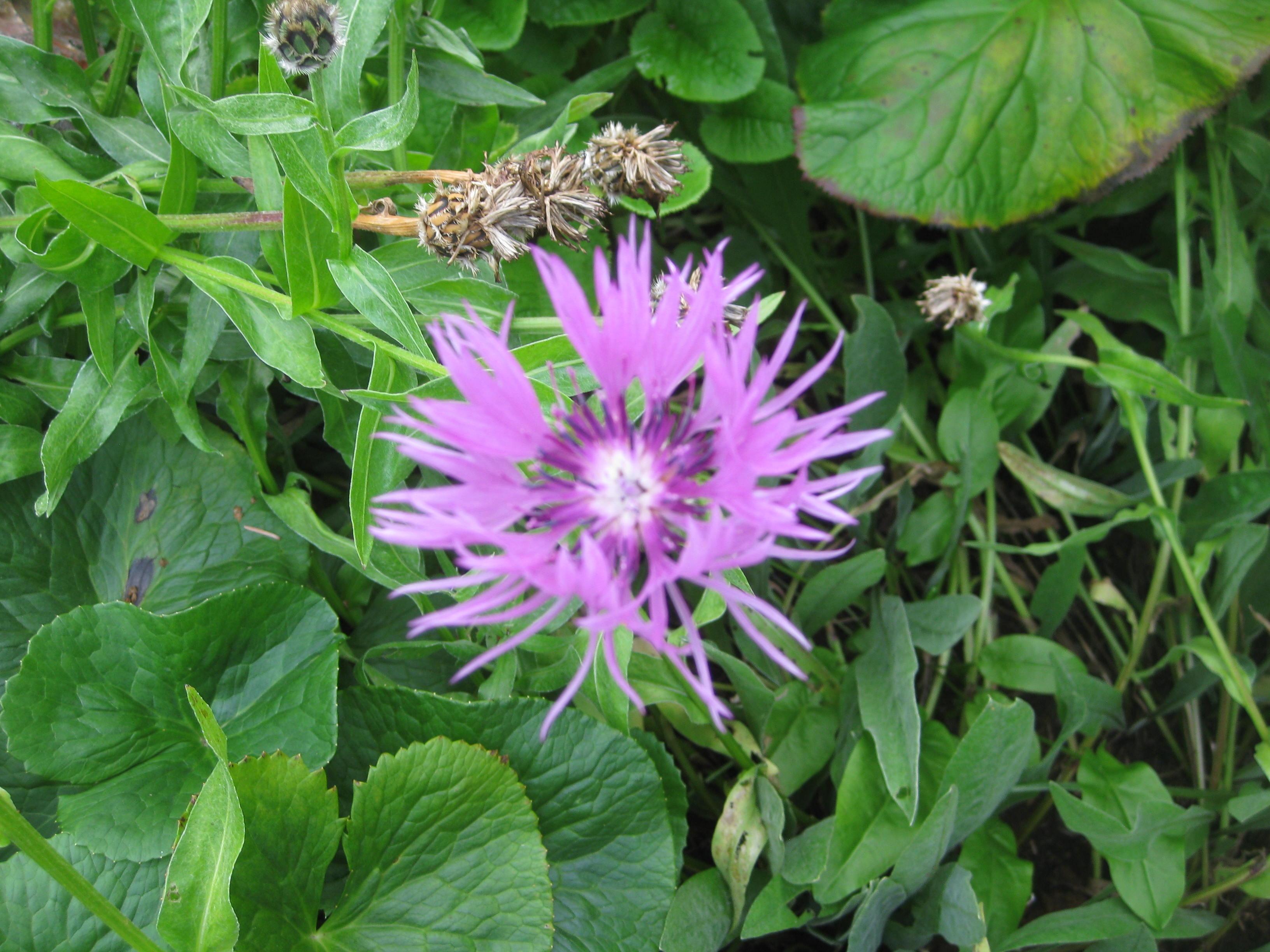 Petra Flowers 1
