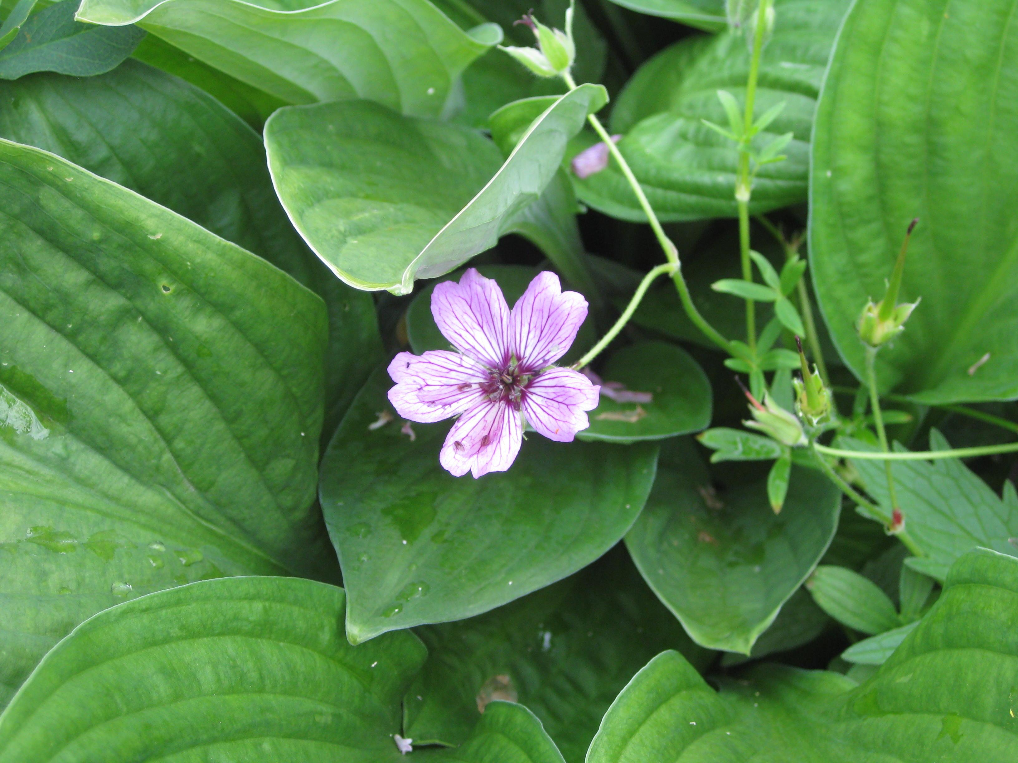Petra Flowers 5