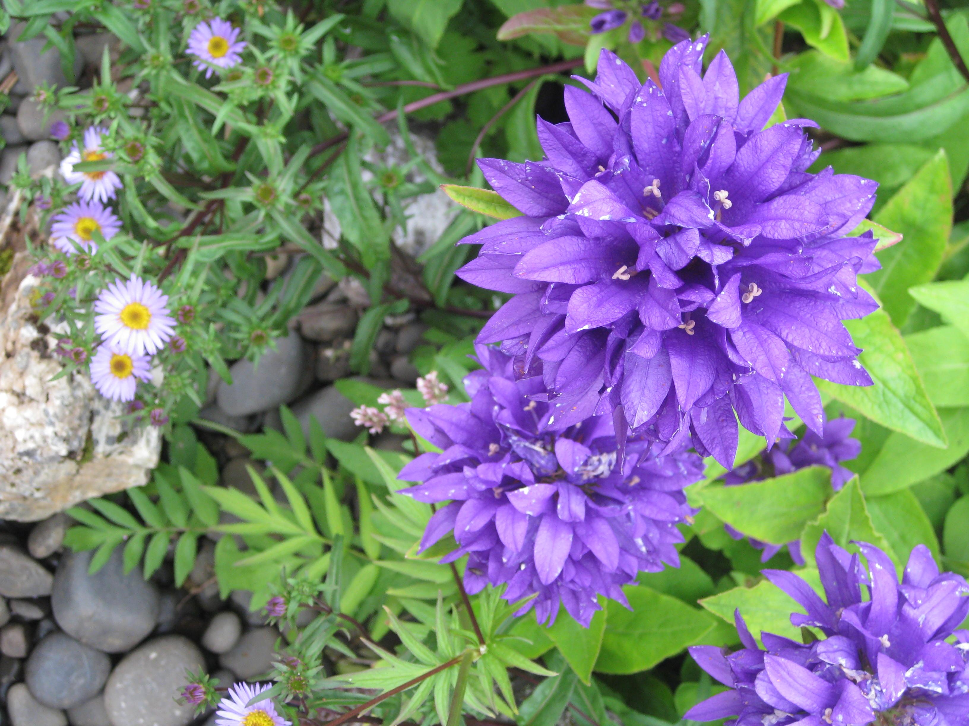 Petra Flowers 6
