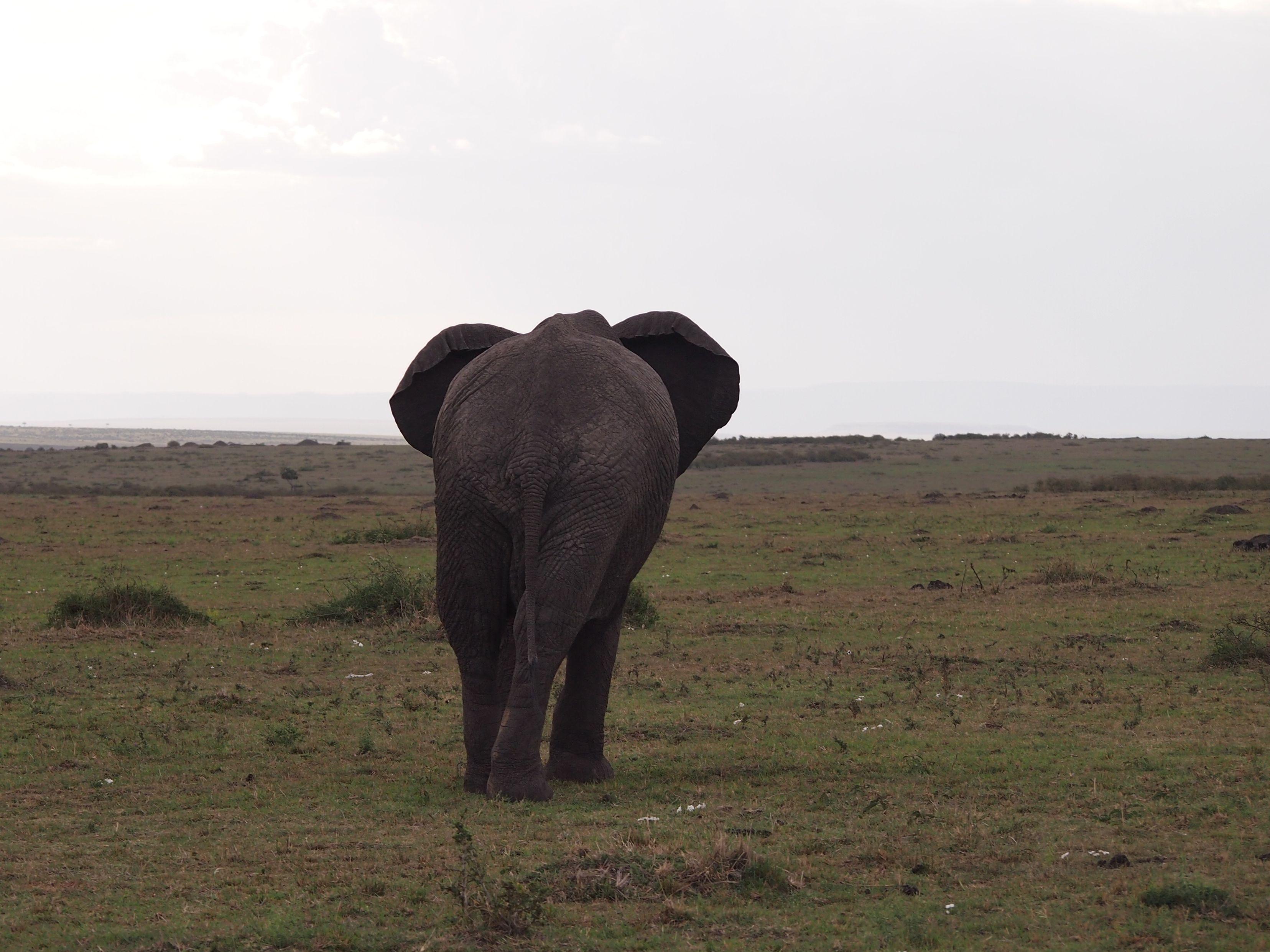 Elephant Bum