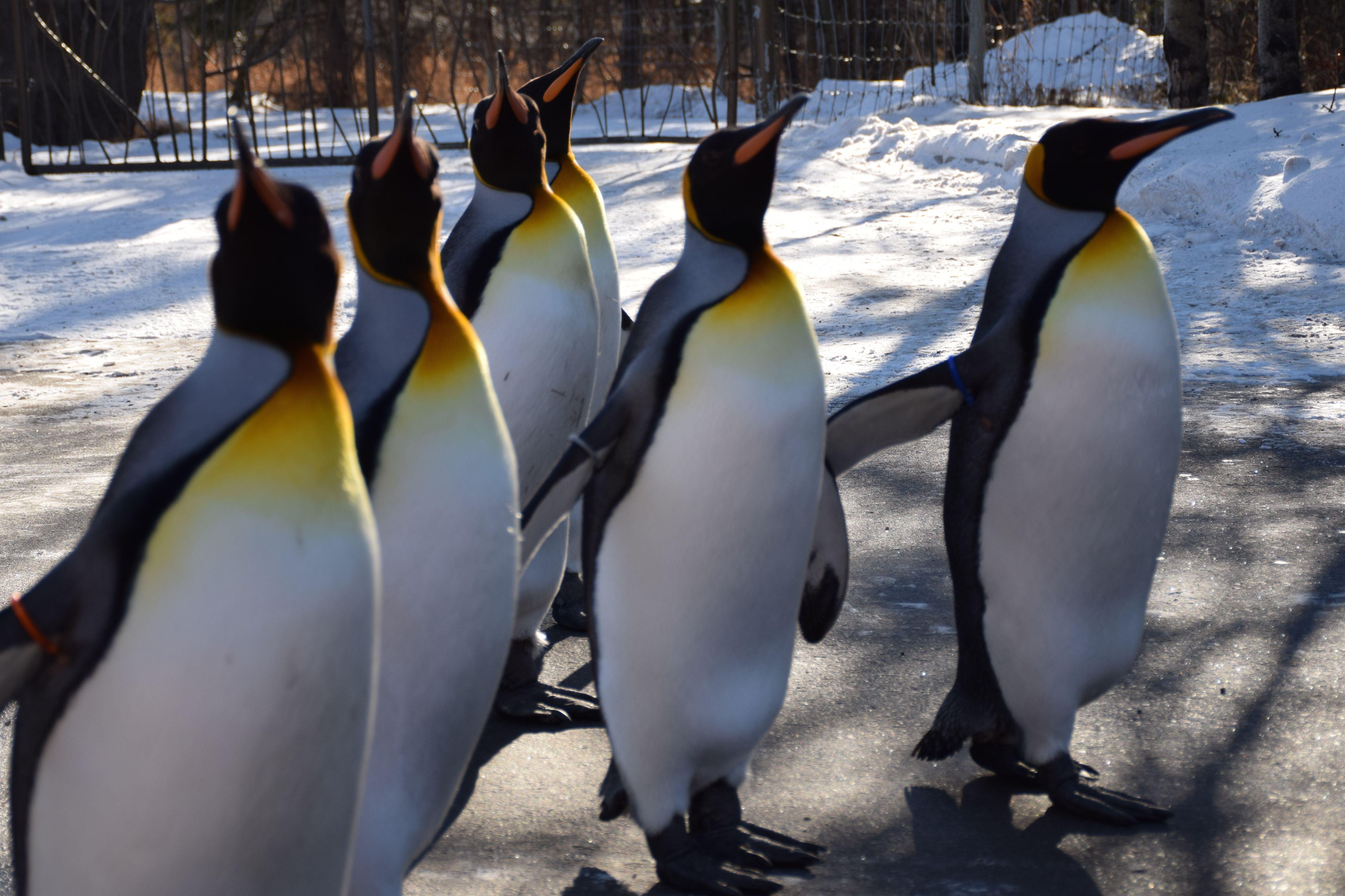 Penguin Walk 5