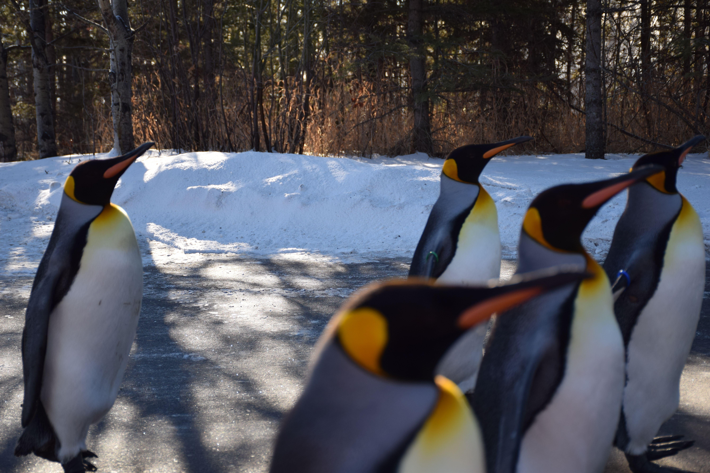 Penguin Walk 4