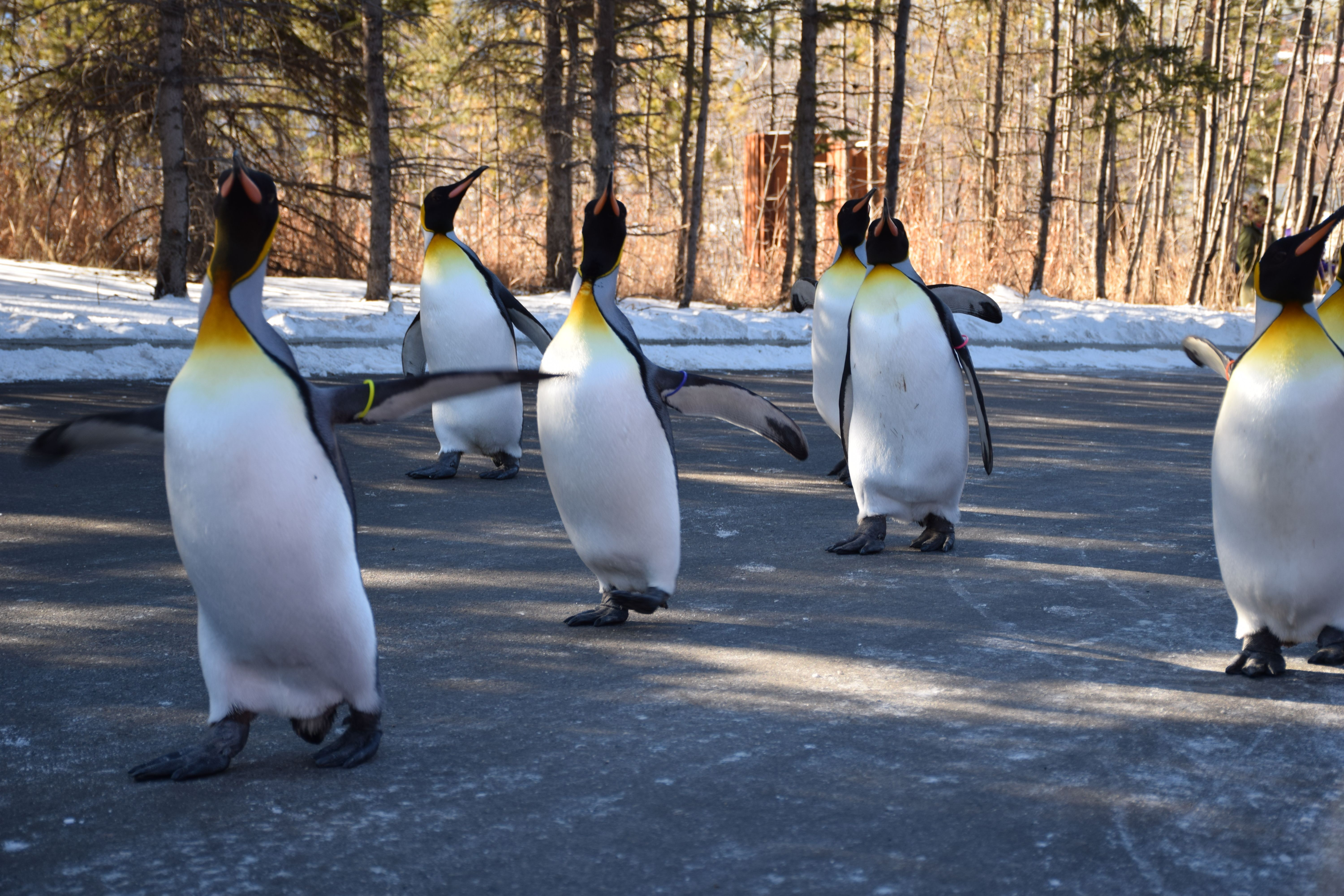 Penguin Walk 3