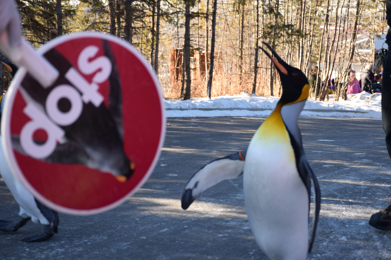 Penguin Walk 2