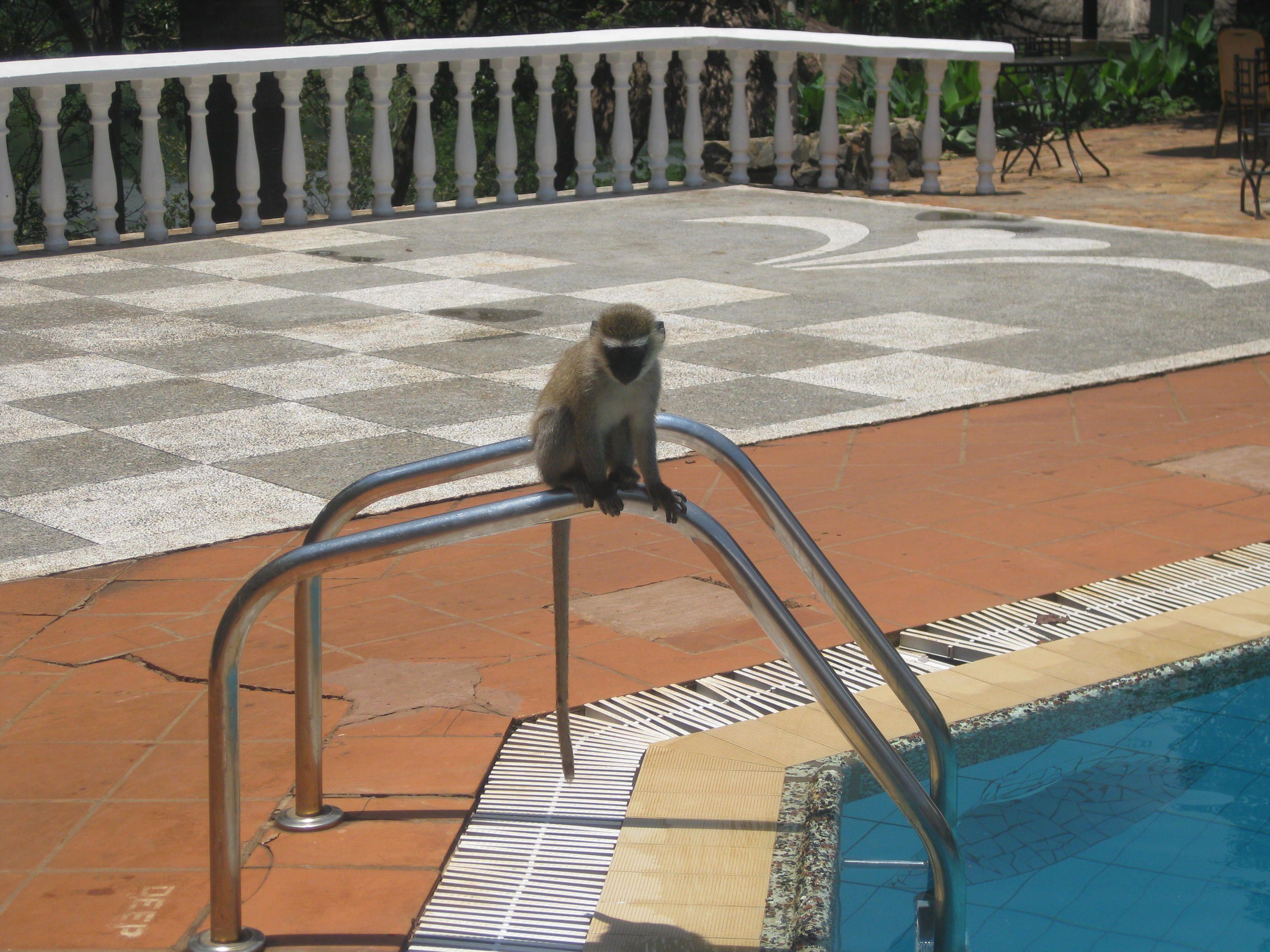 Pool monkey