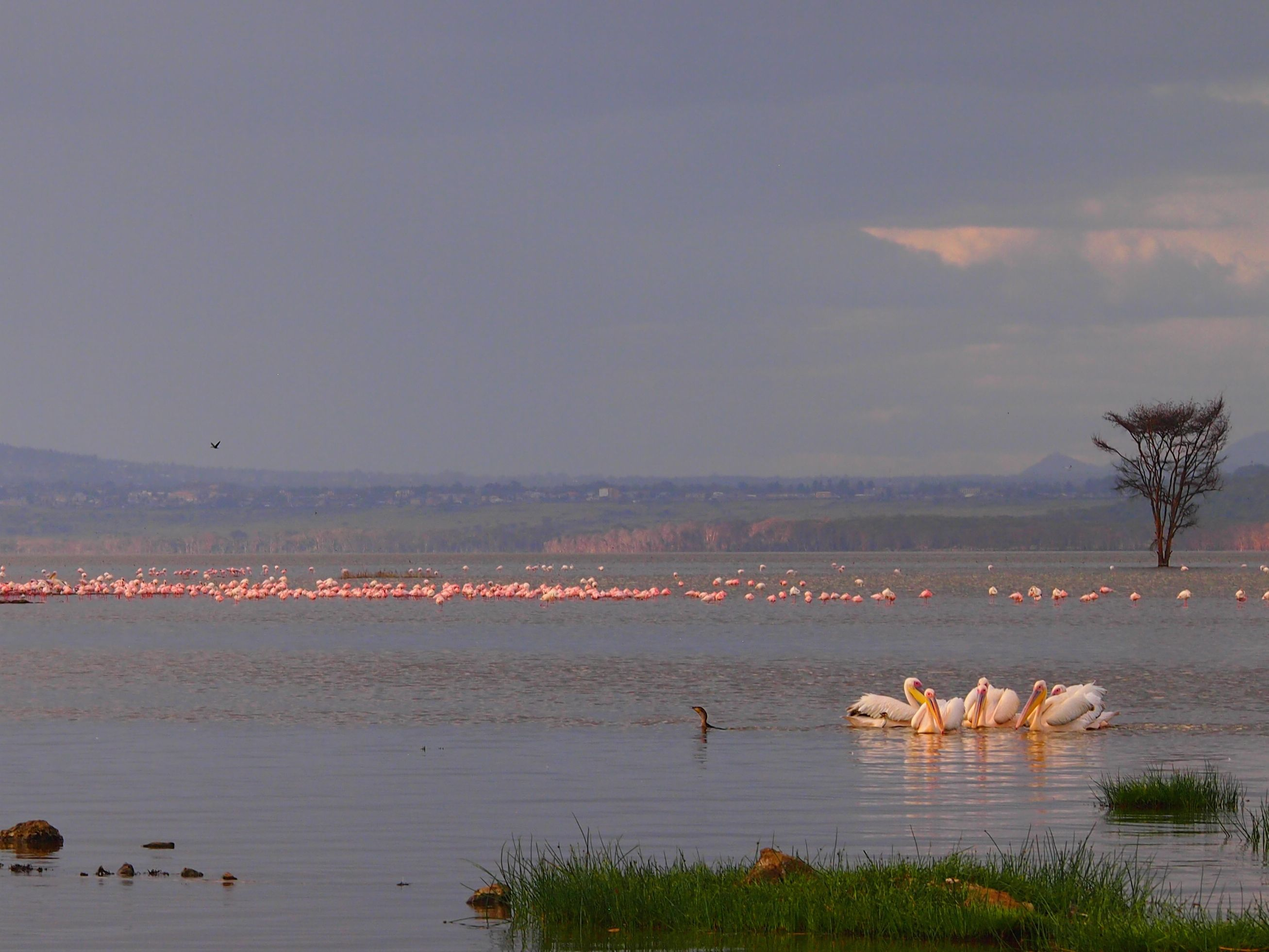 Flamingoes and Storks